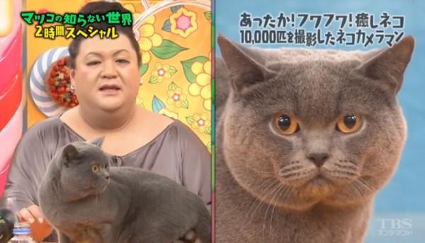 マツコに似ているネコ