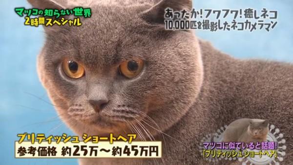 マツコに似ているネコ1