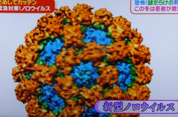 ノロウイルス06
